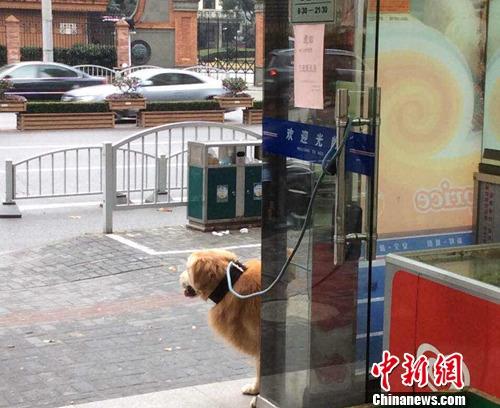 多地出台养犬规定引热议:限定品种、一户一犬