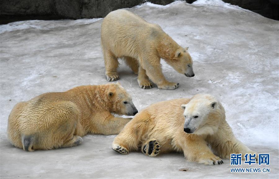 北极熊鸽子拾趣(百态)最好吃什么组图食物图片
