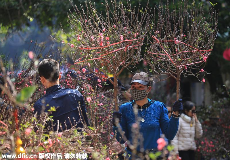 越南庆祝中国农历春节 街头巷尾火红一片