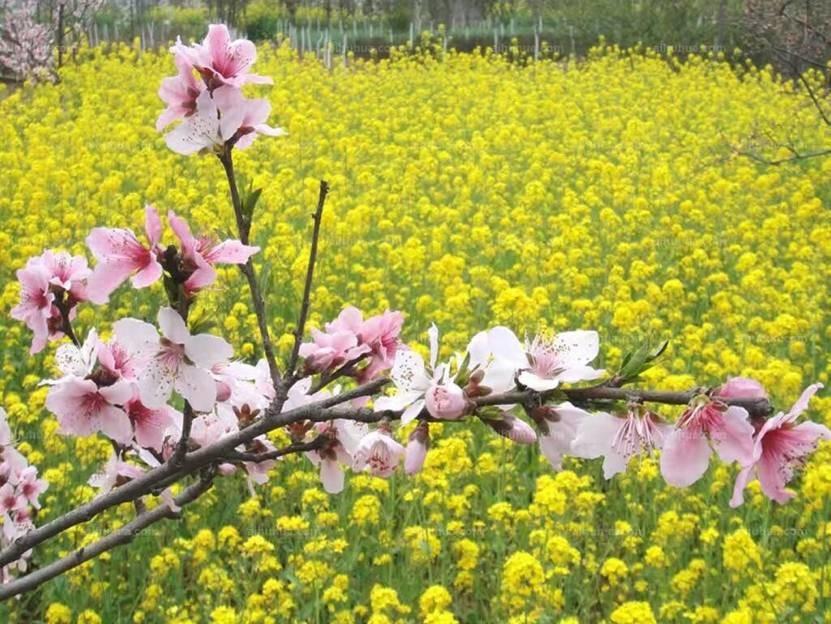 农村风景图片大全立春