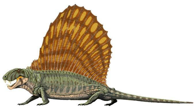 长棘龙是一种单孔类动物,类似爬行动物,冷血且有鳞片,但它们实际上是